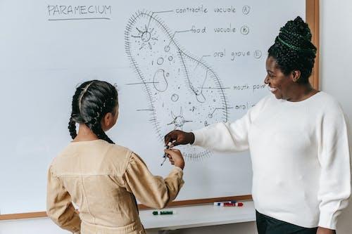 Gratis lagerfoto af afroamerikansk kvinde, akademisk, Anonym