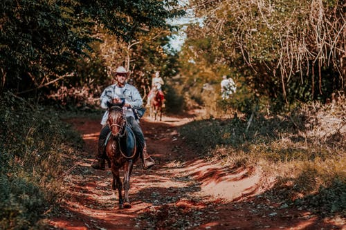 Young man riding horse in sunny forest