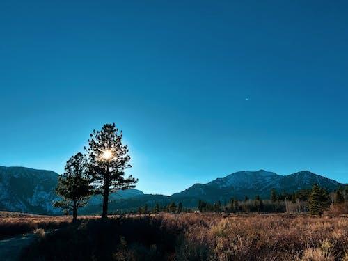 나무의 무료 스톡 사진