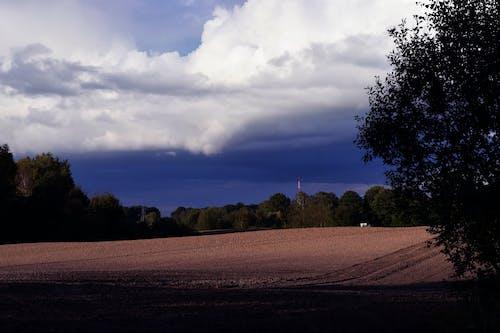 Imagine de stoc gratuită din arbori, cer, cer albastru, codru
