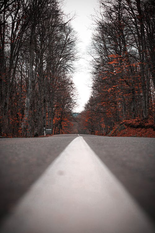 Empty road between leafless trees and dry leaves on ground