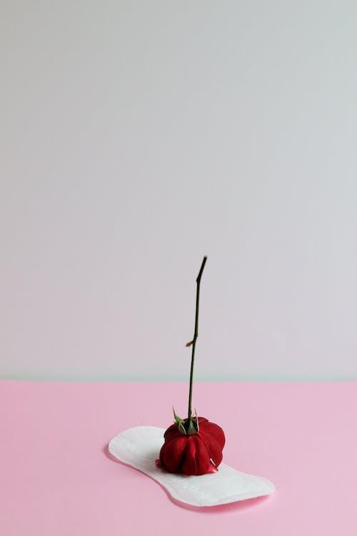 Rosa Roja Sobre Arena Blanca