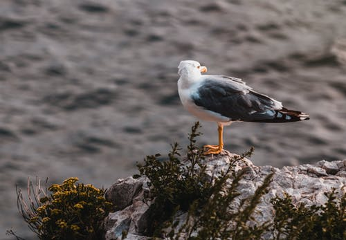 White and Grey Seagull on Rock