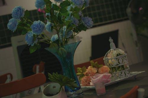 Free stock photo of indoor plants
