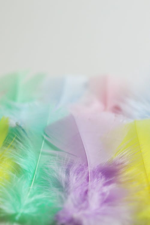 Pink and Green Feather in Close Up Photography