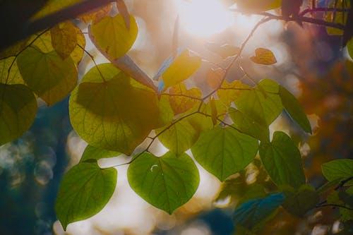 Sunbeam through lush verdant tree leaves