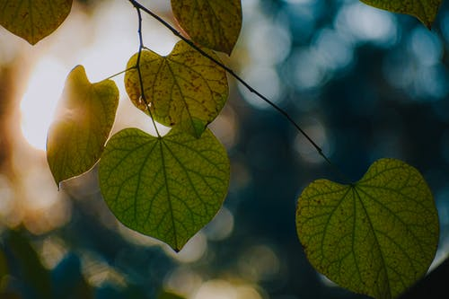 Closeup of fragile green leaves with veins growing in forest on sunny day on blurred background