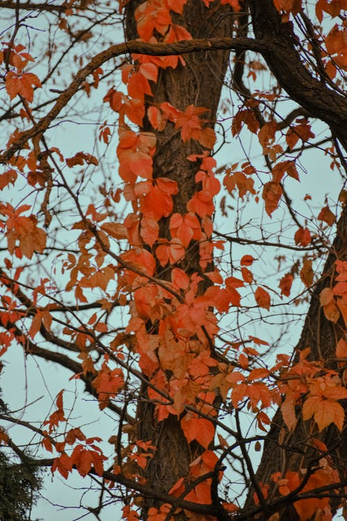 Autumnal leaves on branches of tall tree on cloudy day