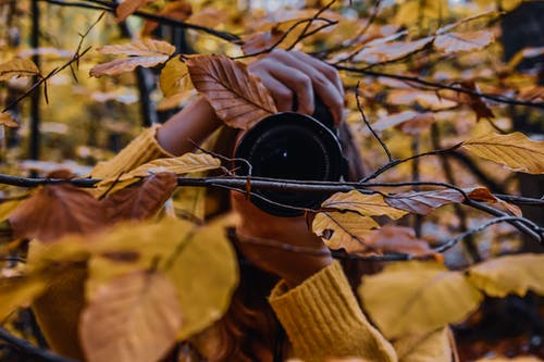 Unrecognizable woman taking pictures among autumn leaves in forest
