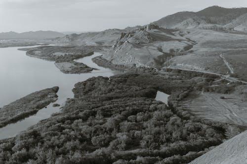 bw, エコロジー, グレーの無料の写真素材