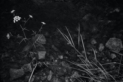 Photos gratuites de aquarelle, bassin, berge de rivière