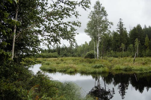 Swamp with trees and grass in nature