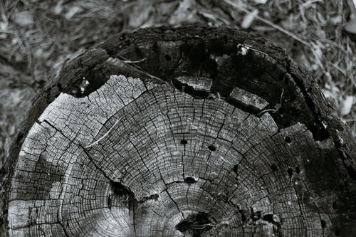 Cracked tree trunk cut surface in woods