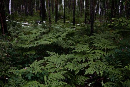 Green fern growing in woods near trees