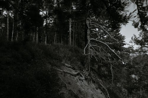 Trees growing on top of mountain