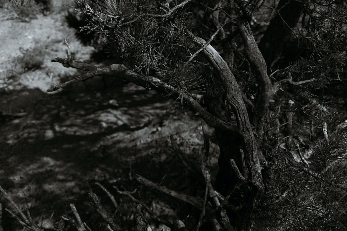 Black and white from above of coniferous tree trunk growing on steep mountain covered with grass over rough river in nature