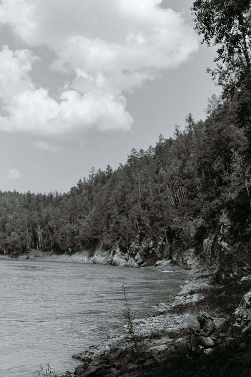 Black and white of overgrown trees growing in woods against river under cloudy sky