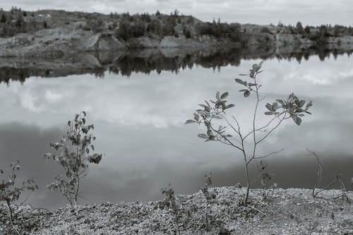 Black and white of river reflecting sky with clouds and mounts with growing plants