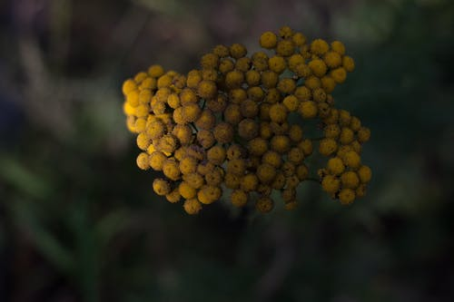 Gratis stockfoto met aangenaam, angiosperms, aroma