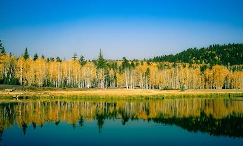 Trees Beside Lake Under Blue Sky