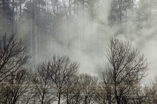 Scenery view of leafless trees with thin trunks growing in woods in misty weather in daytime