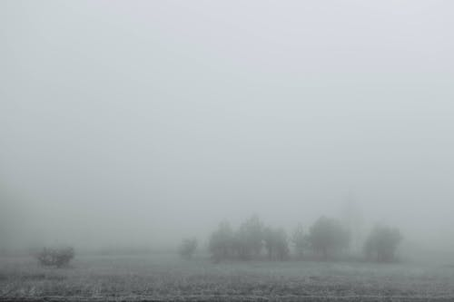 Black and white scenic view of grassland with lush trees under foggy sky in daylight