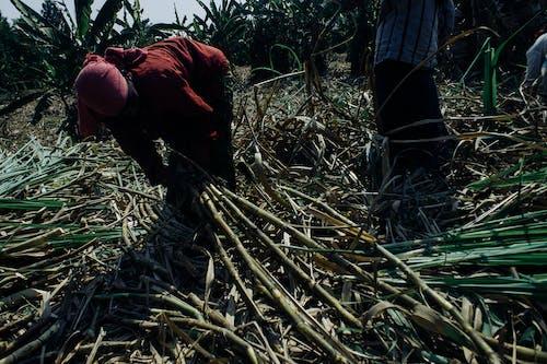 Fotos de stock gratuitas de agricultor, agricultura, agronomía