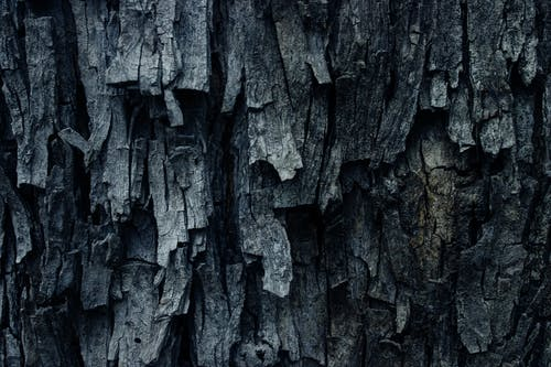 Closeup of rough surface of aged tree with dry uneven bark in forest