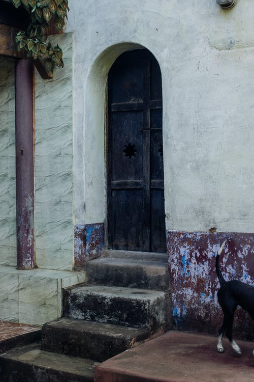 Exterior of aged shabby building with arched wooden door and dog walking on street