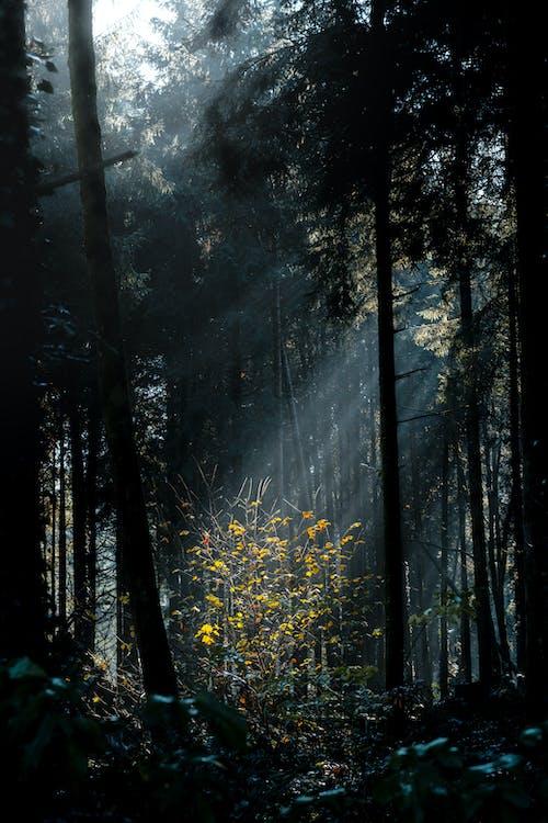 Δωρεάν στοκ φωτογραφιών με forest park, ανατριχιαστικός, απόκοσμος, αυγή