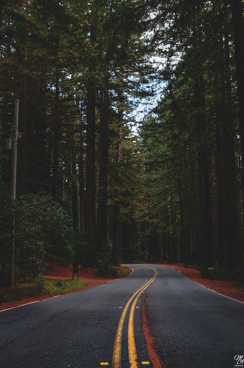 나무, 도로, 버려진, 빈의 무료 스톡 사진