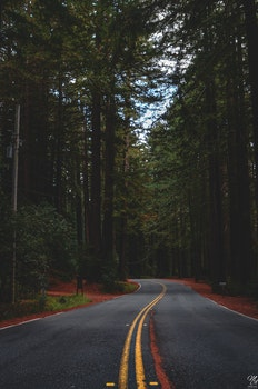 Free stock photo of road, trees, abandoned, empty