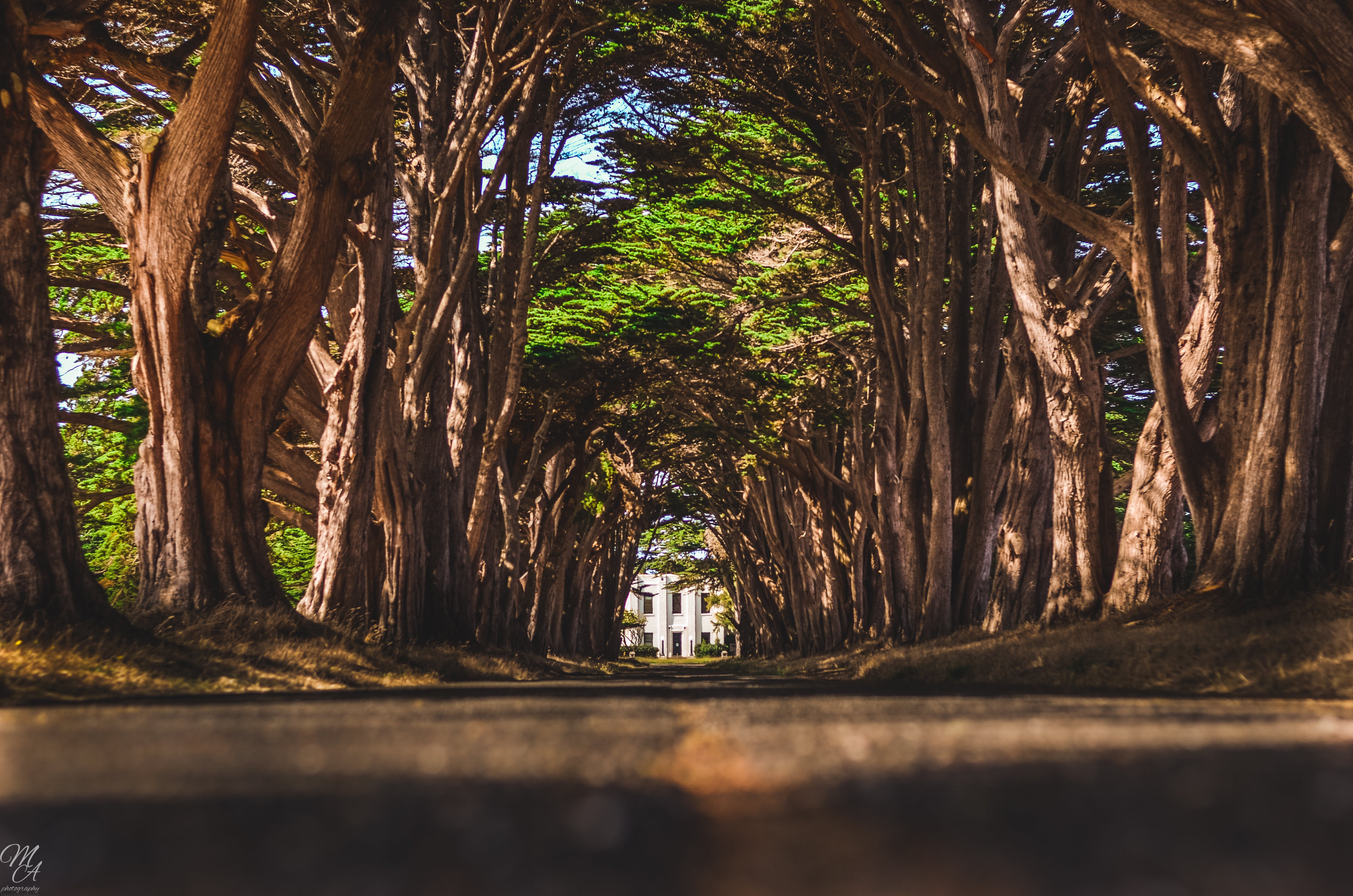 Free stock photo of cypress, tree, tunnel