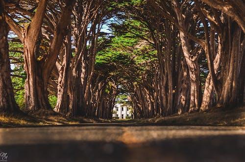 사이프러스, 터널의 무료 스톡 사진
