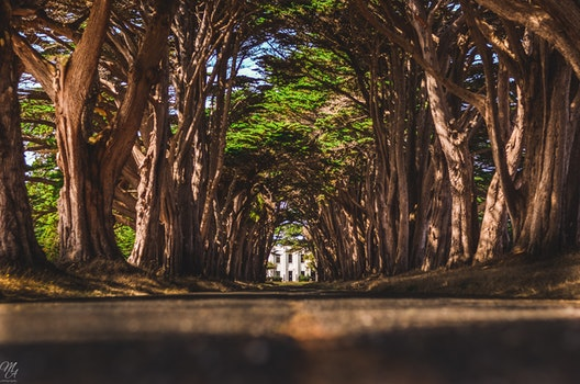 Free stock photo of tunnel, tree, cypress