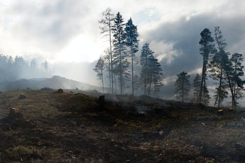 Tall trees growing on hills covered with moss after conflagration in thick smoke