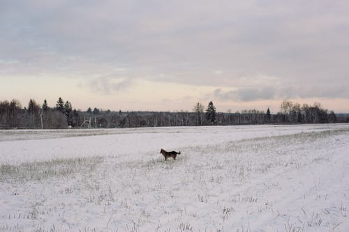 Dog in endless snowy field with trees