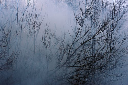 Thin branches of shrub in thick mist in forest