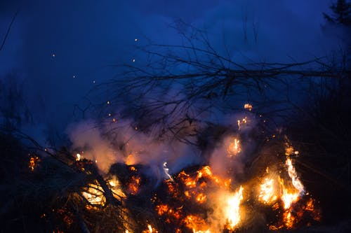Bright flames of fire burning on thin dry branches in smoke in grove of forest