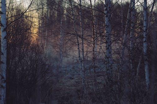 Fragile birch trees among shrubs in mist of forest