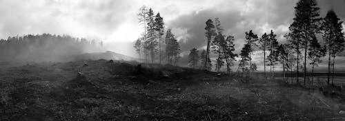 bw, 가지, 경치의 무료 스톡 사진