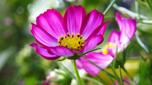 bulanıklık, büyüme, Çiçek açmak, çiçeklenmek içeren Ücretsiz stok fotoğraf