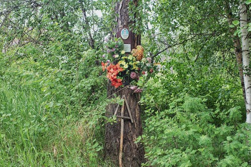 Foto stok gratis alam, alami, batang pohon