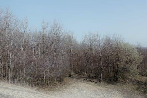 Photos gratuites de à feuilles caduques, aboiement, arbre