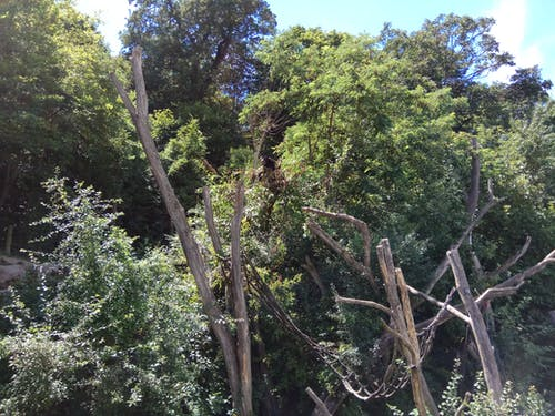 Darmowe zdjęcie z galerii z drzewa, niedźwiedź, niedźwiedź na drzewie, ogród zoologiczny