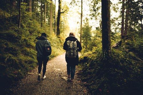 Fotobanka sbezplatnými fotkami na tému cestička, chôdza, les, lesy