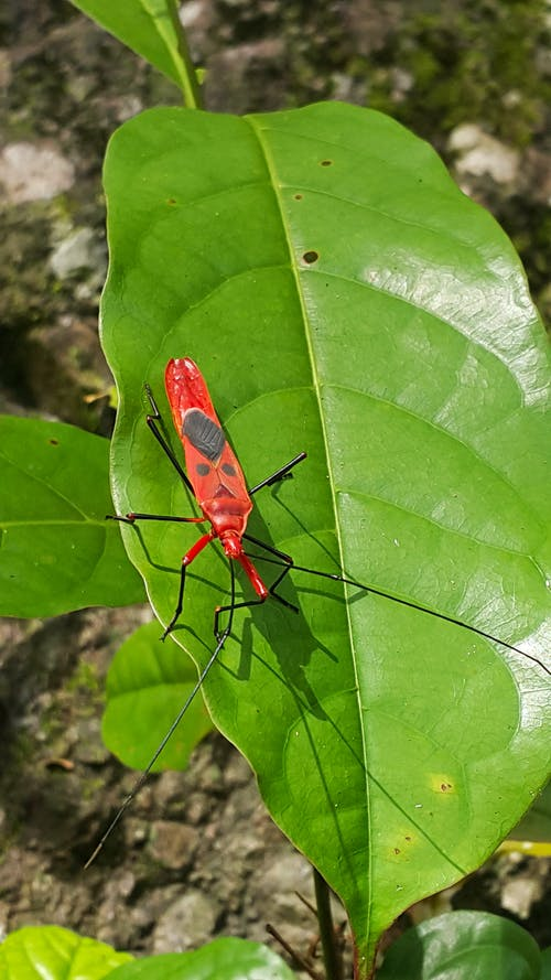 Бесплатное стоковое фото с жук, на открытом воздухе, насекомое, природа