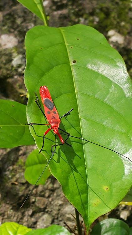 กลางแจ้ง, ธรรมชาติ, แมลง