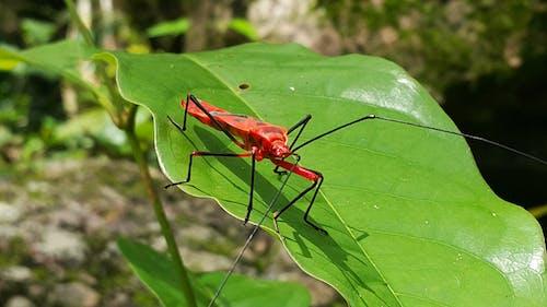 Бесплатное стоковое фото с жук, красный жук, максросъемка, насекомое