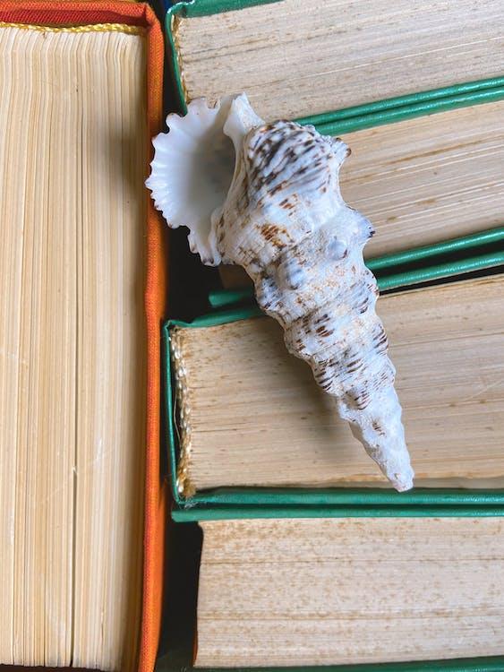 Gratis arkivbilde med arrangement, båthavn, bibliotek
